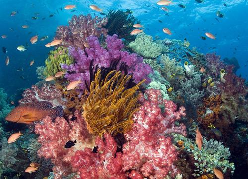 各种珍奇的海底生物在身边游弋