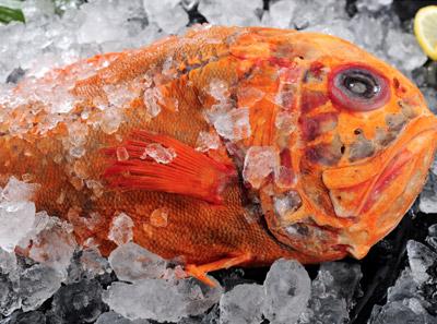 8千米深海鱼南极橙鲷