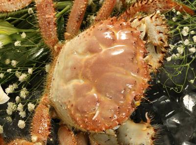 澳门豆捞美国香槟蟹