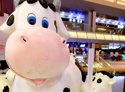 加盟一只酸奶牛